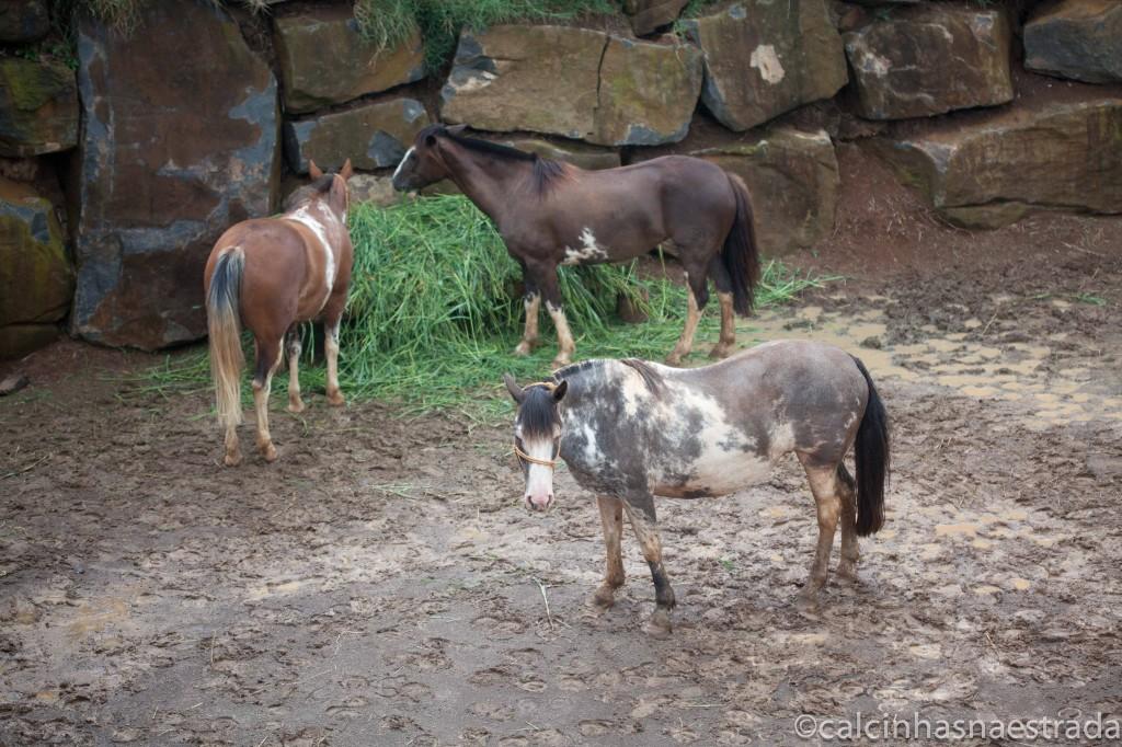 RanchoGaucho2 1024x682 - Curiosidades sobre o Chimarrão no Parque Gaúcho